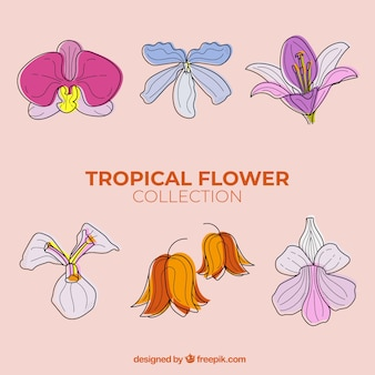 Mooie hand getekend tropische bloem collectie