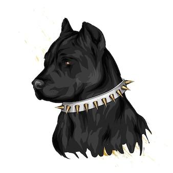 Mooie hond in een halsband