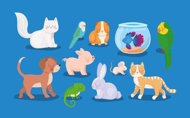 Mooie huisdieren groep