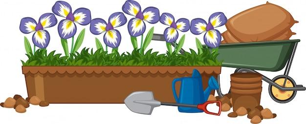 Mooie irisbloemen in de tuin op witte achtergrond