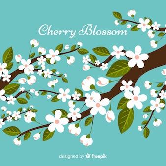 Mooie kersenbloesem boom achtergrond