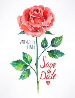 Mooie rode roos aquarel. handgetekende illustratie