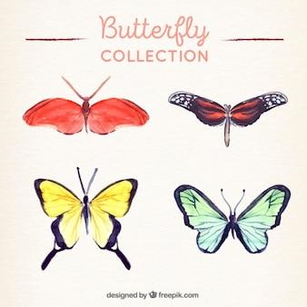 Mooie vlinders beschilderd met waterverf