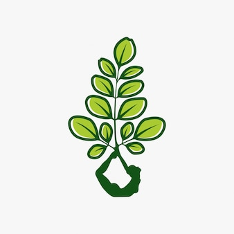 Moringa-logo ontwerp