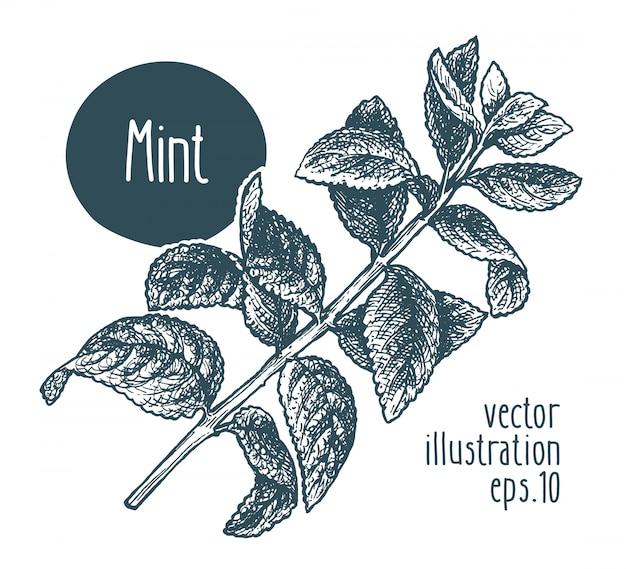 Munttak. vector illustratie hand getrokken.