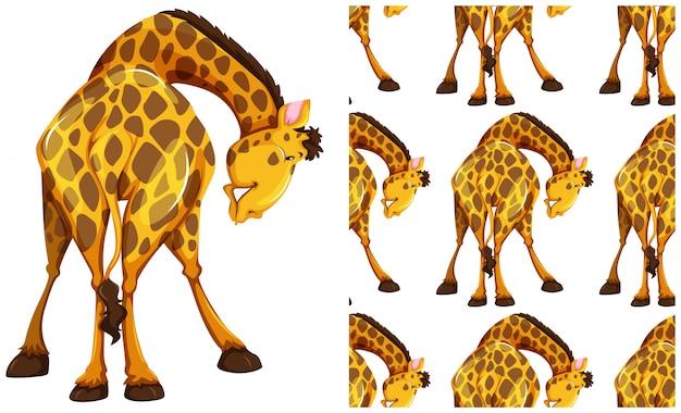 Naadloos girafpatroon dat op wit wordt geïsoleerd