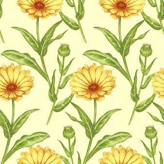 Naadloos patroon met medische planten