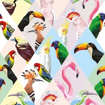 Naadloos patroonbehang met veelkleurige lapwerk tropische vogels
