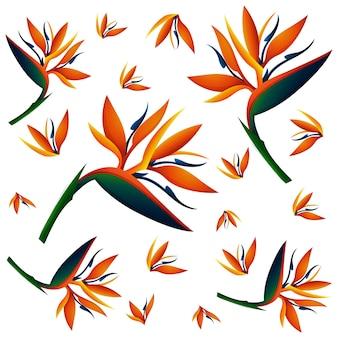 Naadloze achtergrond met paradijsvogel bloemen