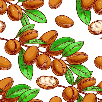 Naadloze achtergrond van argan-boomtakken met vruchten. handgetekende illustratie