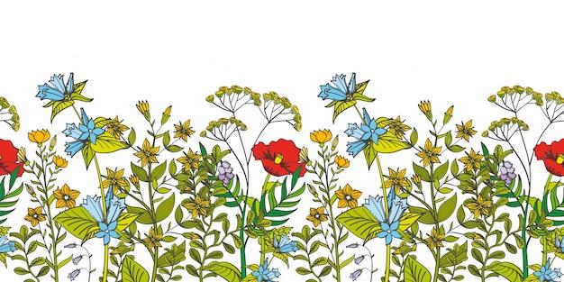 Naadloze bloemengrens met gekleurde kruiden en wilde bloemen