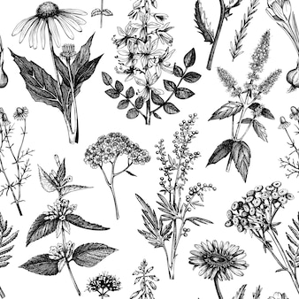 Naadloze patroon met kruiden en specerijen