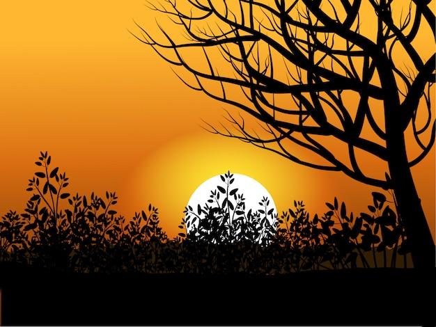 Naakte boom in zonsondergang