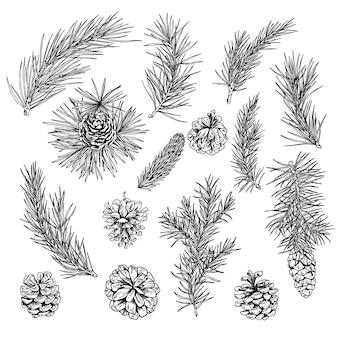 Naaldboom, spar, kegels, winter decoratie elementen, hand getrokken illustratie