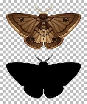 Nachtvlinder en zijn silhouet op transparante achtergrond