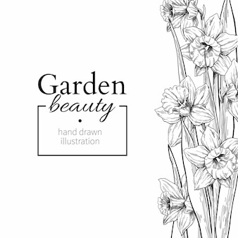 Narcis bloem en bladeren grenstekening.