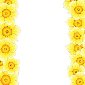 Narcissus bloemenrand