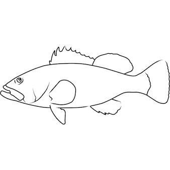 Nassau grouper hand geschetst hand getrokken vector clipart