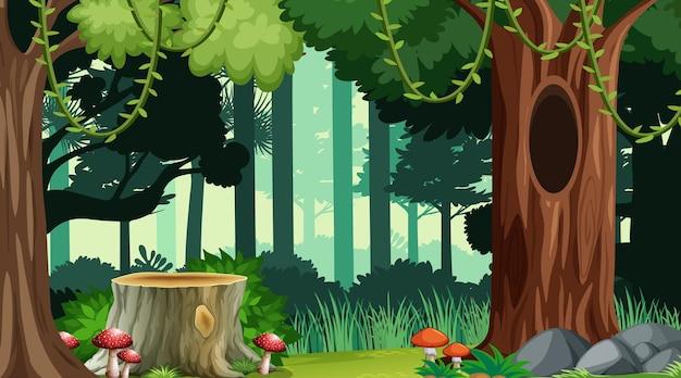 Natuur bos landschap achtergrond