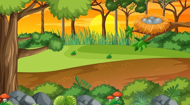 Natuurbos bij zonsondergangtijdscène