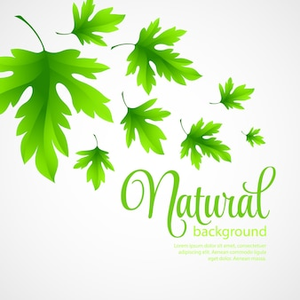 Natuurlijke achtergrond met groene de lentebladeren