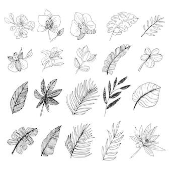 Natuurlijke blad en bloem wilde bos collectie lijntekeningen