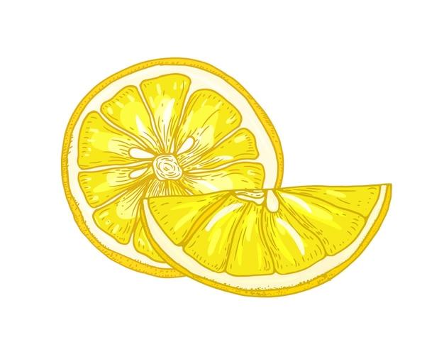 Natuurlijke gedetailleerde tekening van citroenen in stukjes gesneden geïsoleerd op een witte achtergrond.