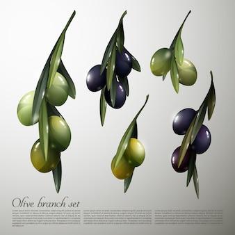 Natuurlijke olive tree branches set