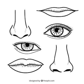 Neuzen en lippen in de hand getrokken stijl