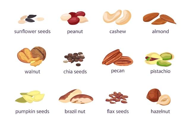 Noten en zaden. hazelnoot, amandel, walnoot en pinda. zonnebloem, pompoen en chiazaad stapel. pistache, cashew en paranoot vector pictogramserie. illustratie pinda en amandelnoot, cashew en pistache
