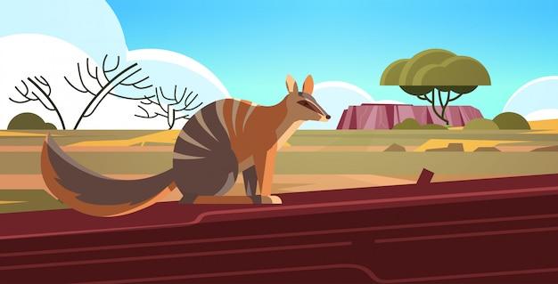 Numbat genietend van de zon in australië woestijn australische wilde dieren wildlife fauna concept landschap horizontaal