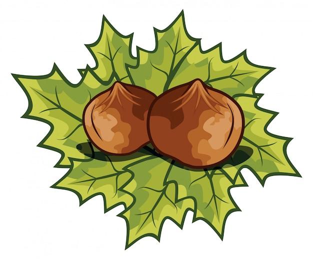 Nuts filberts - hazelnoot