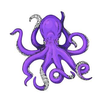 Octopus hand getekende illustratie
