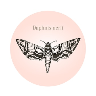 Oleander hawk moth tattoo art. daphnis nerii. vector illustratie.
