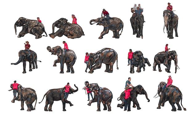 Olifanten show en training met mahout