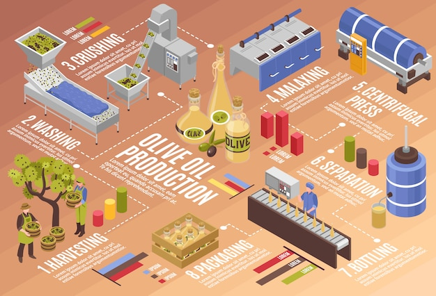 Olijfolieproductie infographics