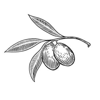 Olive brunch in gravure stijlelement voor poster, kaart, banner. illustratie
