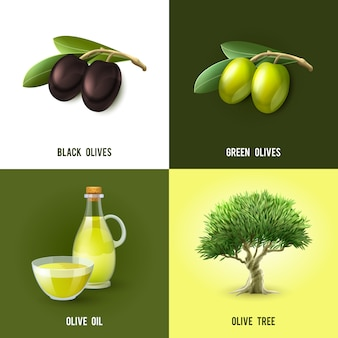 Olive concept