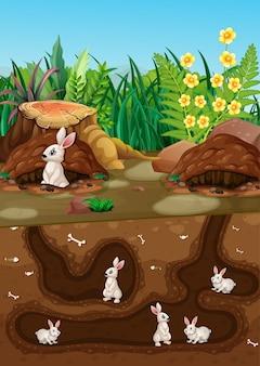 Ondergronds dierenhol met veel witte konijnen