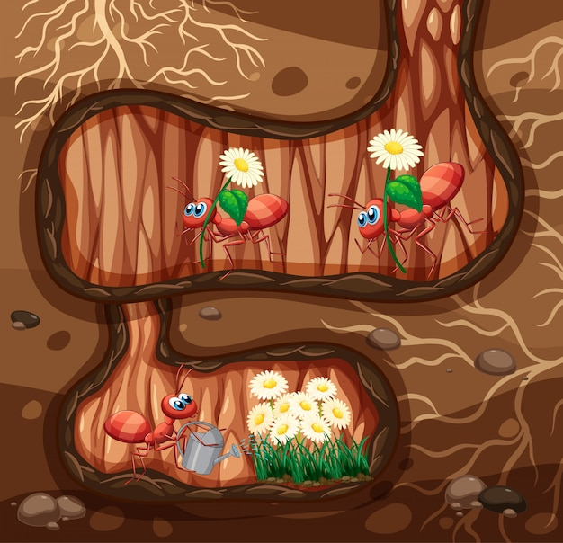 Ondergrondse scène met veel mieren en bloemen