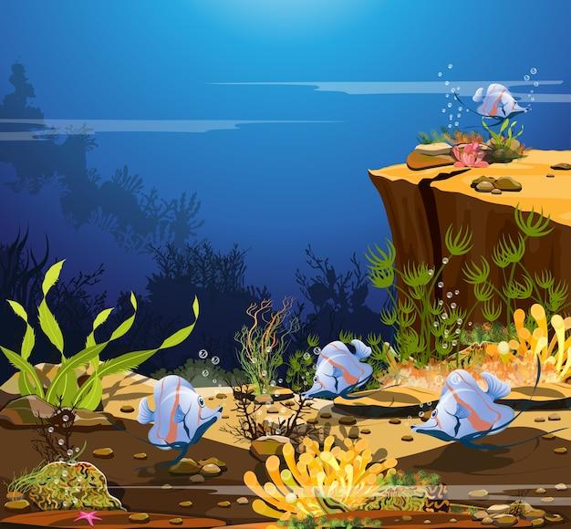 Onderwaterrotsen, koraalriffen en vissenzwermen.