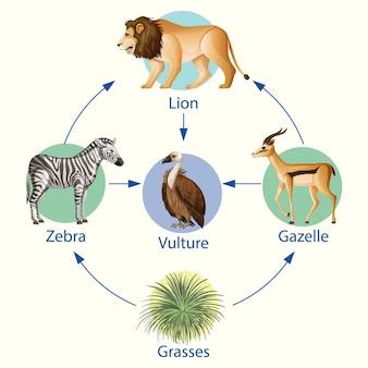 Onderwijsaffiche van biologie voor het diagram van de voedselketens