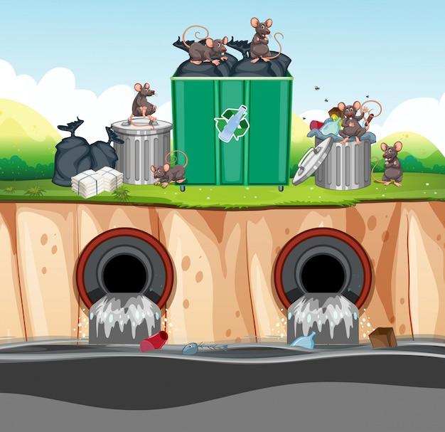 Ongezonde afvalverwijdering met rat