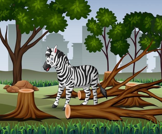 Ontbossingscène met zebra en houtillustratie