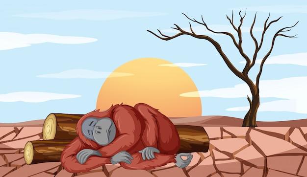 Ontbossingsscène met het sterven van de aap