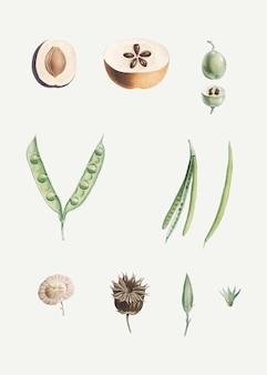 Ontleed fruit en bloemen