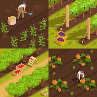 Oogsten concept 4 isometrische illustratie met landarbeiders