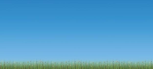 Openluchtachtergrond van groen gebied met blauwe hemelachtergrond.