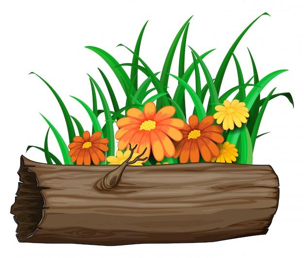 Oranje bloemen op houten logboek