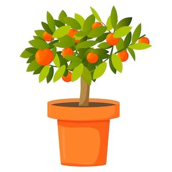 Oranje boom in een pot